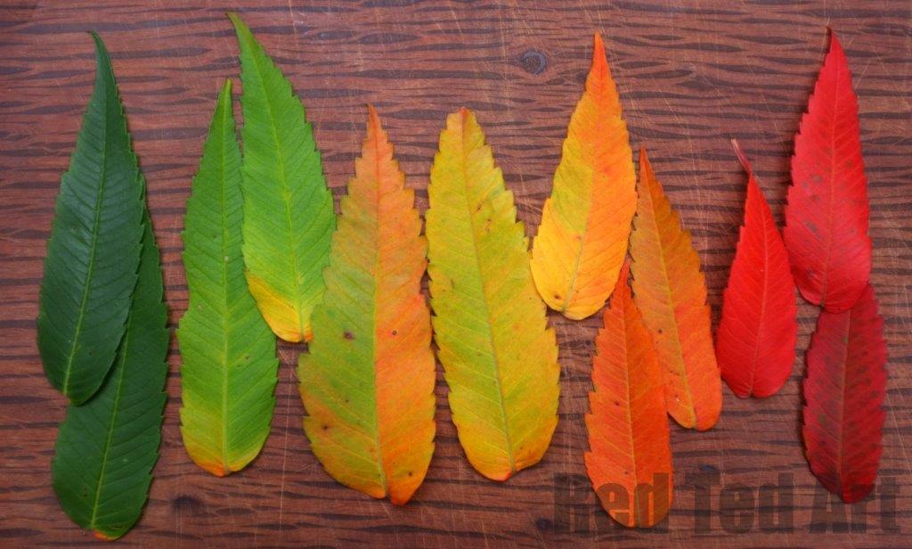 how to celebrate fall equinox